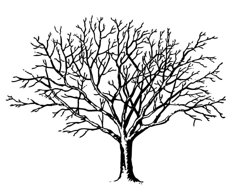 Tree Images Tree Image
